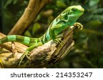 Green Lizard   Green Lizard...