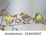 Three Little Warblers