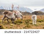 wild reindeer family  ... | Shutterstock . vector #214722427
