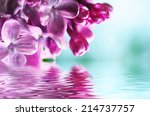 macro image of spring lilac... | Shutterstock . vector #214737757
