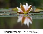 White Water Lilies On The...