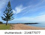 Norfolk Island Pine Tree Grows...