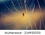 Vintage Photo Of Spider On Web