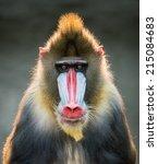 Frontal Portrait Of A Backlit...