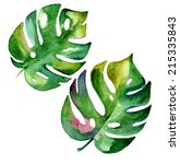 Tropical Leaves In Watercolor...