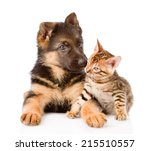 Stock photo little bengal cat and german shepherd puppy dog lying together isolated on white background 215510557