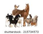 Group Farm Animals - Fine Art prints
