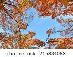 Autumn Foliage Of Maple Tree ...
