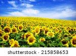 sunflower field  | Shutterstock . vector #215858653