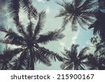 branches of coconut palms under ... | Shutterstock . vector #215900167