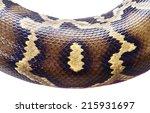 ������, ������: python snake skin