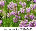 spring flower bed. purple false ... | Shutterstock . vector #215945653