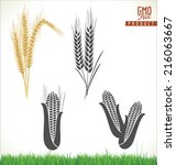 wheat and corn  | Shutterstock .eps vector #216063667