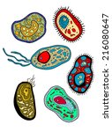cartoon various amebas  amoebas ... | Shutterstock .eps vector #216080647