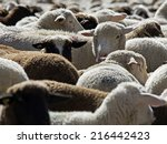 Herd Of Sheep  Schafherde