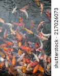 Gold Fish Pond Of Japanese...