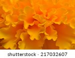 Marigold Flower Isolated For...