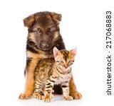 german shepherd puppy and... | Shutterstock . vector #217068883