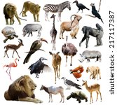 Lions And Other African Animal...
