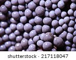 Small photo of micro-organism fungus mold structure