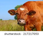 head of a cow against a pasture | Shutterstock . vector #217217053