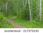nature trail thru a happy... | Shutterstock . vector #217373233
