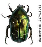 Green Beetle. Rose Chafer ...