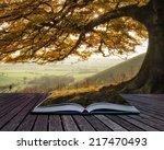 book concept beautiful golden... | Shutterstock . vector #217470493