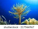 Tube Worm Underwater