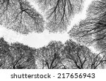 Detailed Trees Branches On Blu...