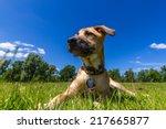 dream weather | Shutterstock . vector #217665877