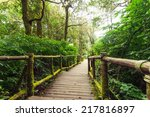 Jungle Landscape. Wooden Bridg...