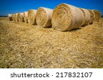 Bales Of Grain After Harvestin...