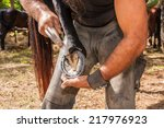 Shoeing Hooves Riding Domestic...
