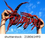 hands holding bunch of dry hot... | Shutterstock . vector #218061493