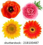 four beautiful single flower... | Shutterstock . vector #218100487