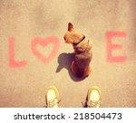 A Cute Chihuahua Sitting In Th...