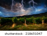 Grape Field In The Storm.