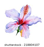 Tropical Flower Isolated On...