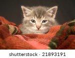 Stock photo kitten resting on red blanket 21893191