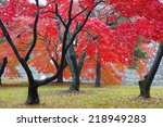 The Red Maple Trees In Japanes...
