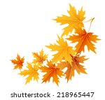 autumn maple leaves isolated on ... | Shutterstock .eps vector #218965447
