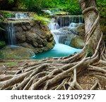 Banyan Tree And Limestone...