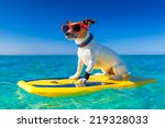 Dog Surfing On A Surfboard...