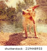 A Dog Shaking Off Water By A...