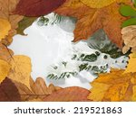 Frozen Puddle And Autumn...
