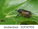 cicada   Shutterstock . vector #219767953