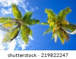 Palm Trees From Below.