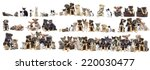 Stock photo set of pets cat and dog 220030477