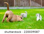 Dog And Two Kittens Playing...
